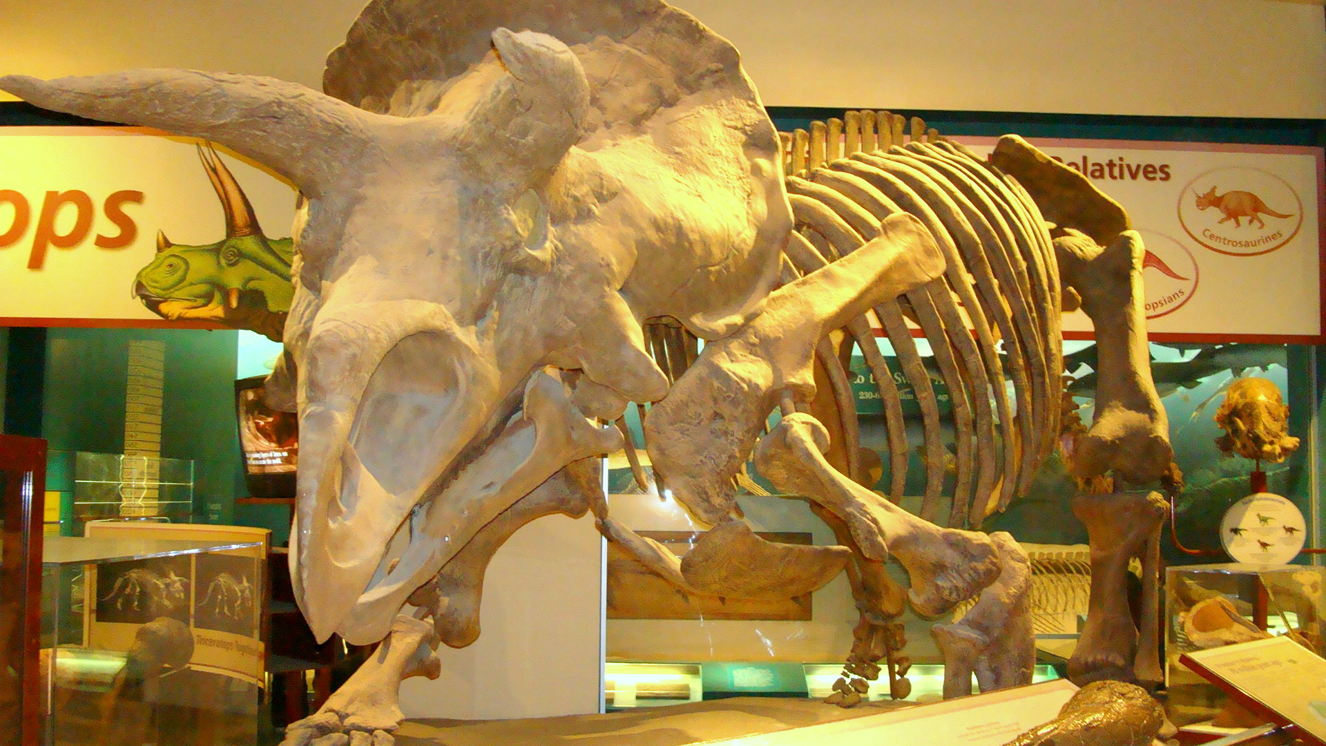 National Museum Of Natural History Tours